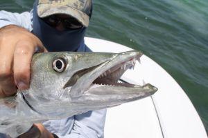 ¿Ataque de tiburón o de barracuda? Un niño latino sufre una gran herida en una playa de Florida