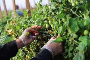 EE.UU. y México acuerdan ampliar cooperación científica en sector agroalimentario
