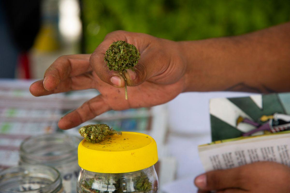Organización latina promueve el uso del cannabis legal en Estados Unidos