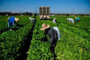 Buscan más presupuesto en salud y alimentación para los trabajadores sin documentos