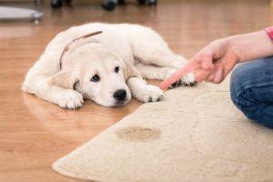 Los mejores tapetes entrenadores para que tu mascota aprenda a hacer sus necesidades donde corresponde