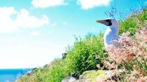 Redonda: la isla caribeña poblada por ratas y cabras que se transformó en un valioso paraíso ecológico