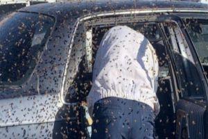 FOTOS: Enjambre de 15,000 abejas invade auto de hombre que compraba en tienda de comestibles