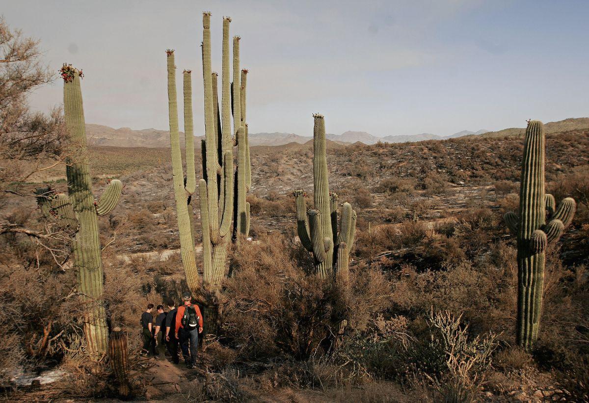 Más de 5,000 personas se reunieron en peligrosa fiesta ilegal en un bosque de Arizona