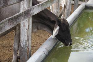 ¿Agua o leche? Lecheros, forrajeros y ambientalistas pelean gota a gota en México