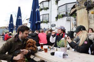 Compañía busca perro para probar cerveza, la paga es de $20,000 dólares