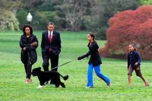 """Muere """"Bo"""", el perro que acompañó a la familia Obama en la Casa Blanca"""