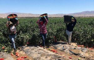Sierra & Tierra: Mujeres esencialmente heroicas