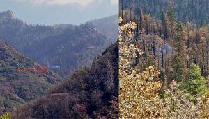 Una secuoya todavía está humeando despues de los grandes incendios de 2020 en California