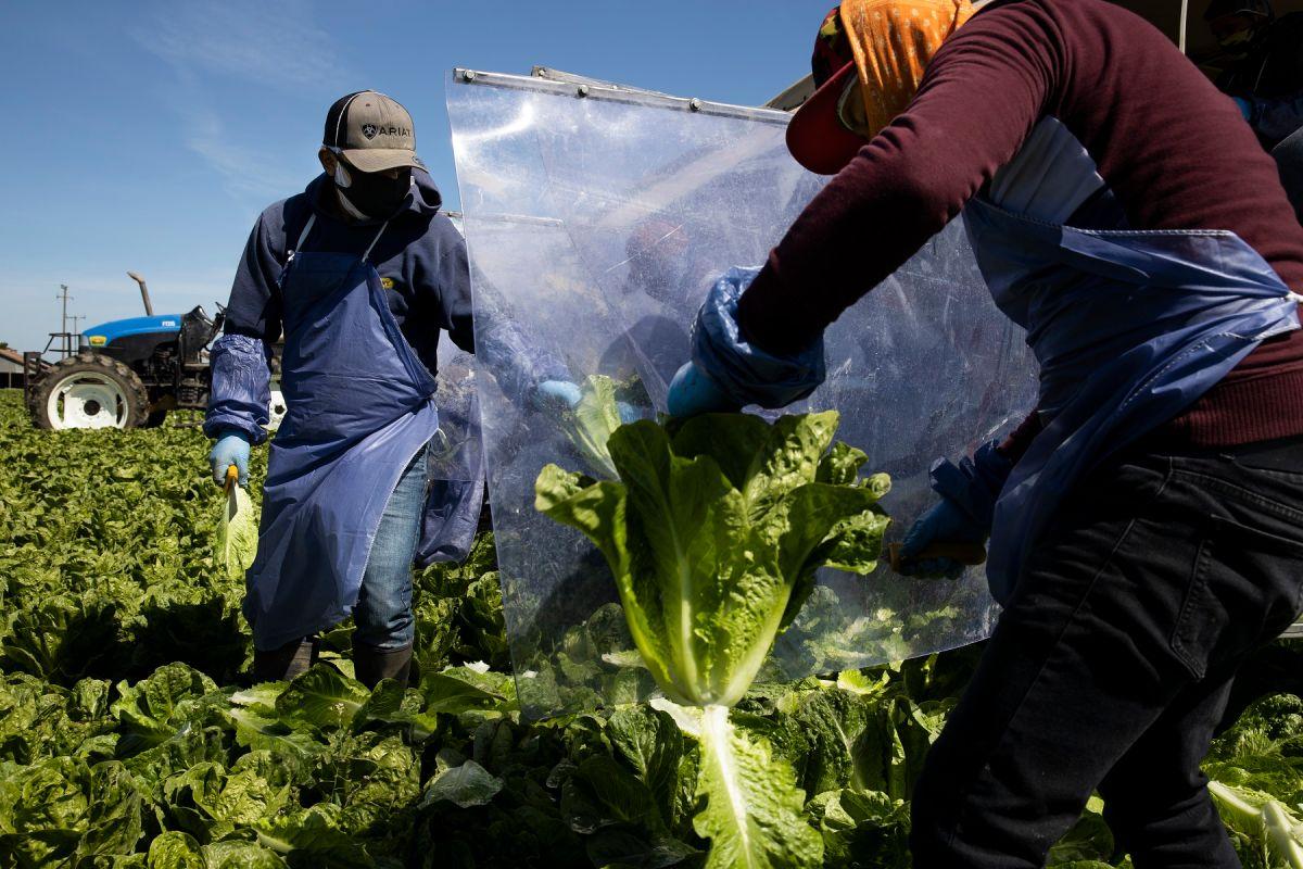 Aprueban ley que elimina el uso de la palabra 'alien' de las leyes de California para referirse a inmigrantes. (Getty Images)