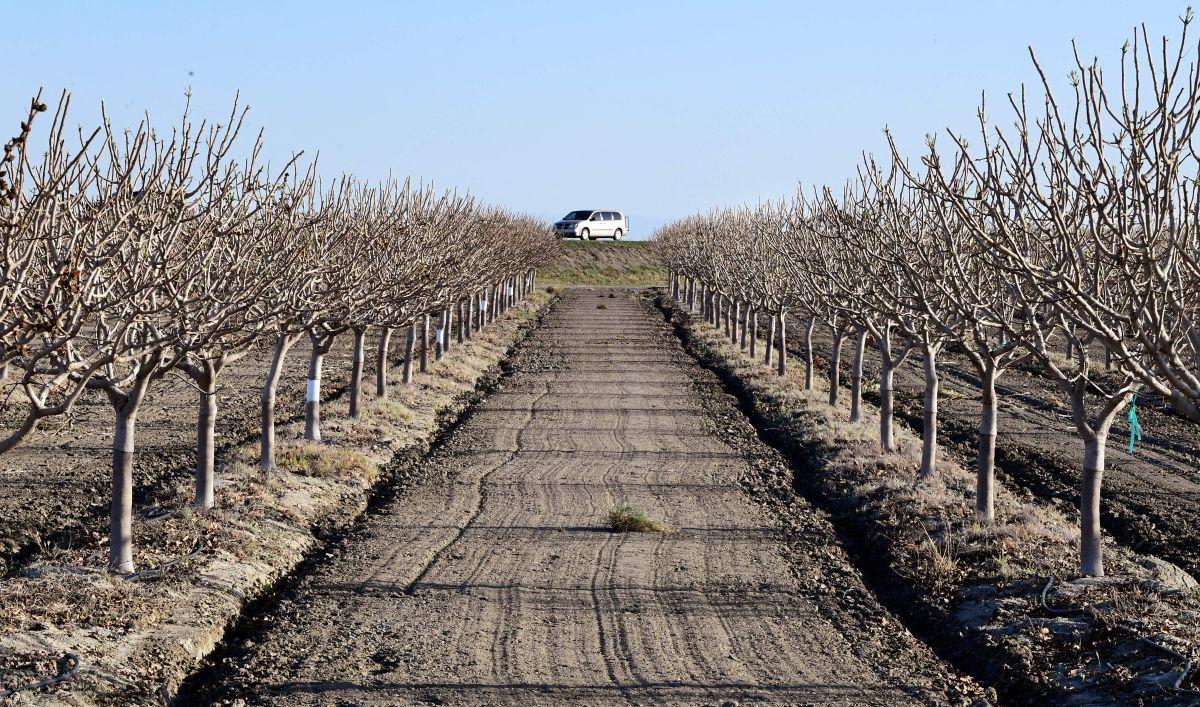 Comunidades rurales latinas de California encaran el más serio impacto por la sequía