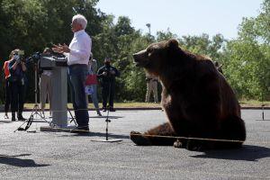 Aspirante republicano John Cox usa a gigantesco oso para hacer campaña contra Gavin Newsom