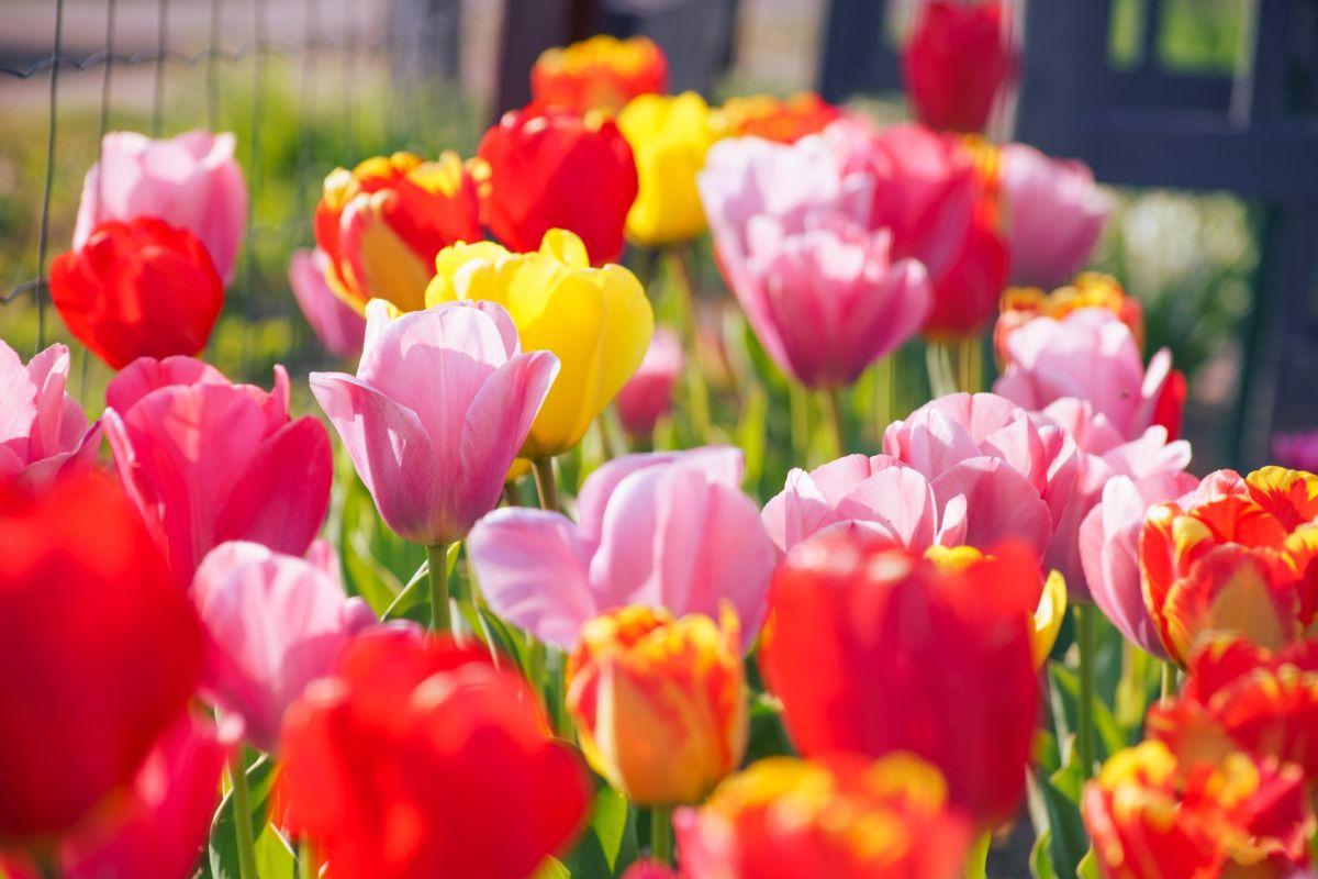 Día de la Madre 2021: Cuál es la flor ideal para mamá, según su signo Zodiacal