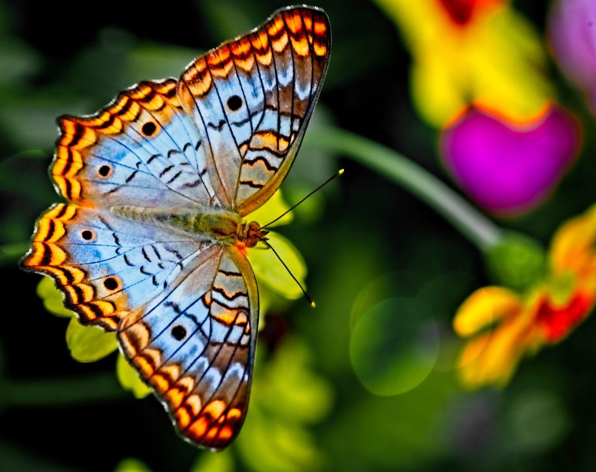¿Qué significado espiritual tiene la visita de una mariposa, según sus colores?
