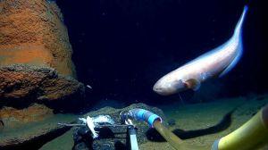 Estos son los puntos más profundos de cada uno de los 5 océanos