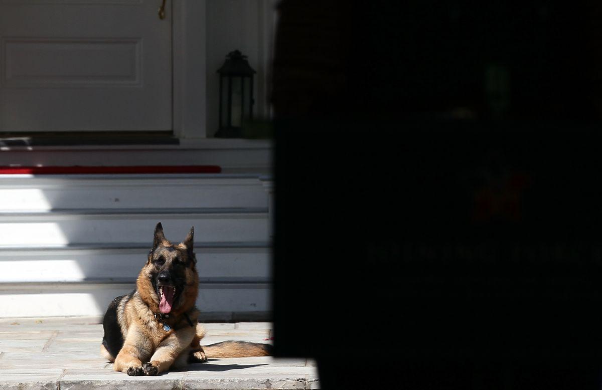 """Murió """"Champ"""", uno de los perros pastores alemanes de los Biden"""