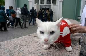 Achilles, el gato ruso que predice los ganadores de la Eurocopa 2020