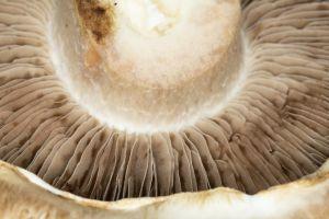 Migrañas y dolores de cabeza: 5 alimentos que pueden ayudar a prevenirlos