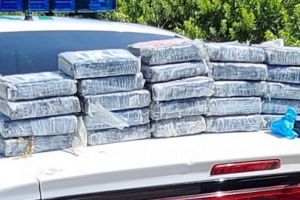 Descubren más de $1,2 millones en cocaína mientras buscaban tortugas en Florida