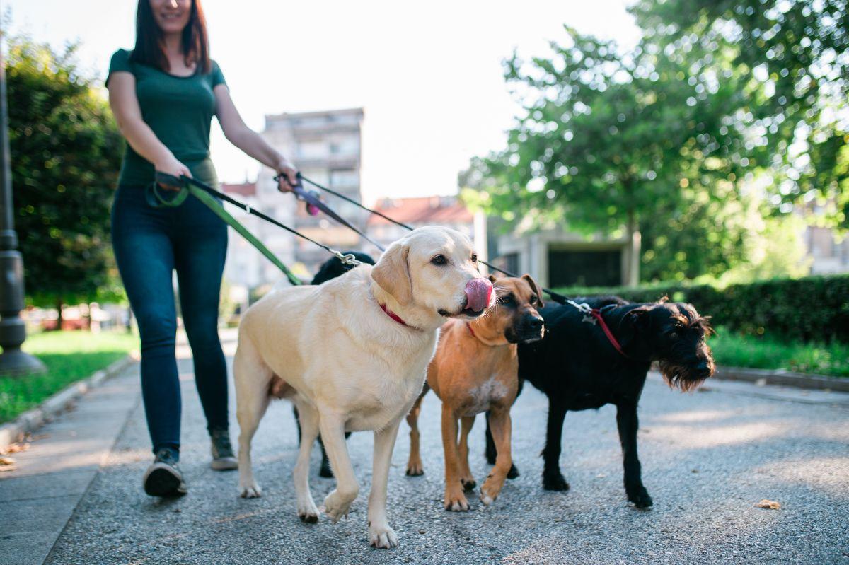 5 productos que debes tener si quieres empezar a ganar ingresos extra paseando perros