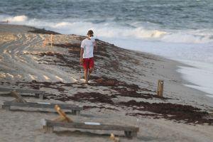 Llega el verano y una peligrosa marea roja amenaza con paralizar el turismo en Tampa, Florida: qué es