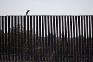 Inmigrante muere al caer del muro fronterizo mientras 'La Migra' detenía a otro indocumentado