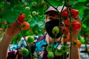 Clases gratuitas para hacer un jardín ecológico