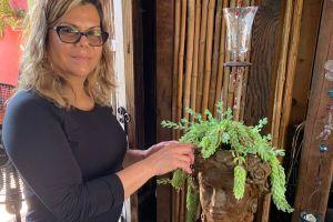 Saca fuerzas de su pérdida para diseñar arreglos de plantas contra la sequía