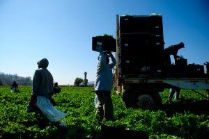 40% de los alimentos cultivados en el mundo terminan en la basura y generan más contaminación que los autos