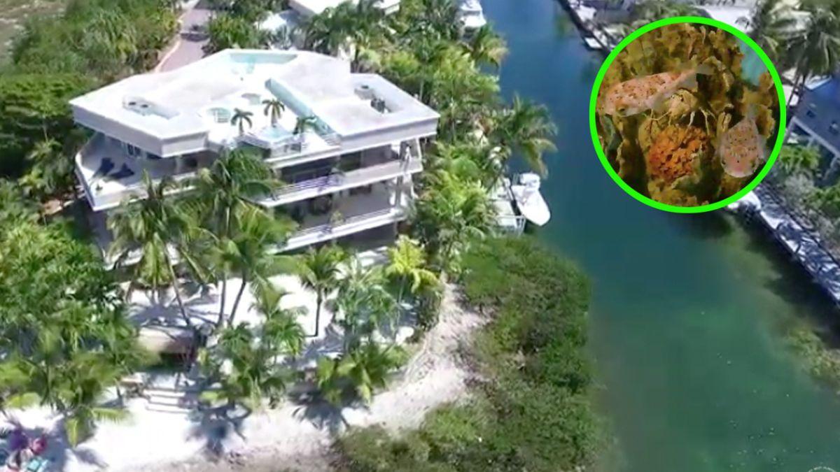 Venden hermosa casa con arrecife de coral en Florida Keys.