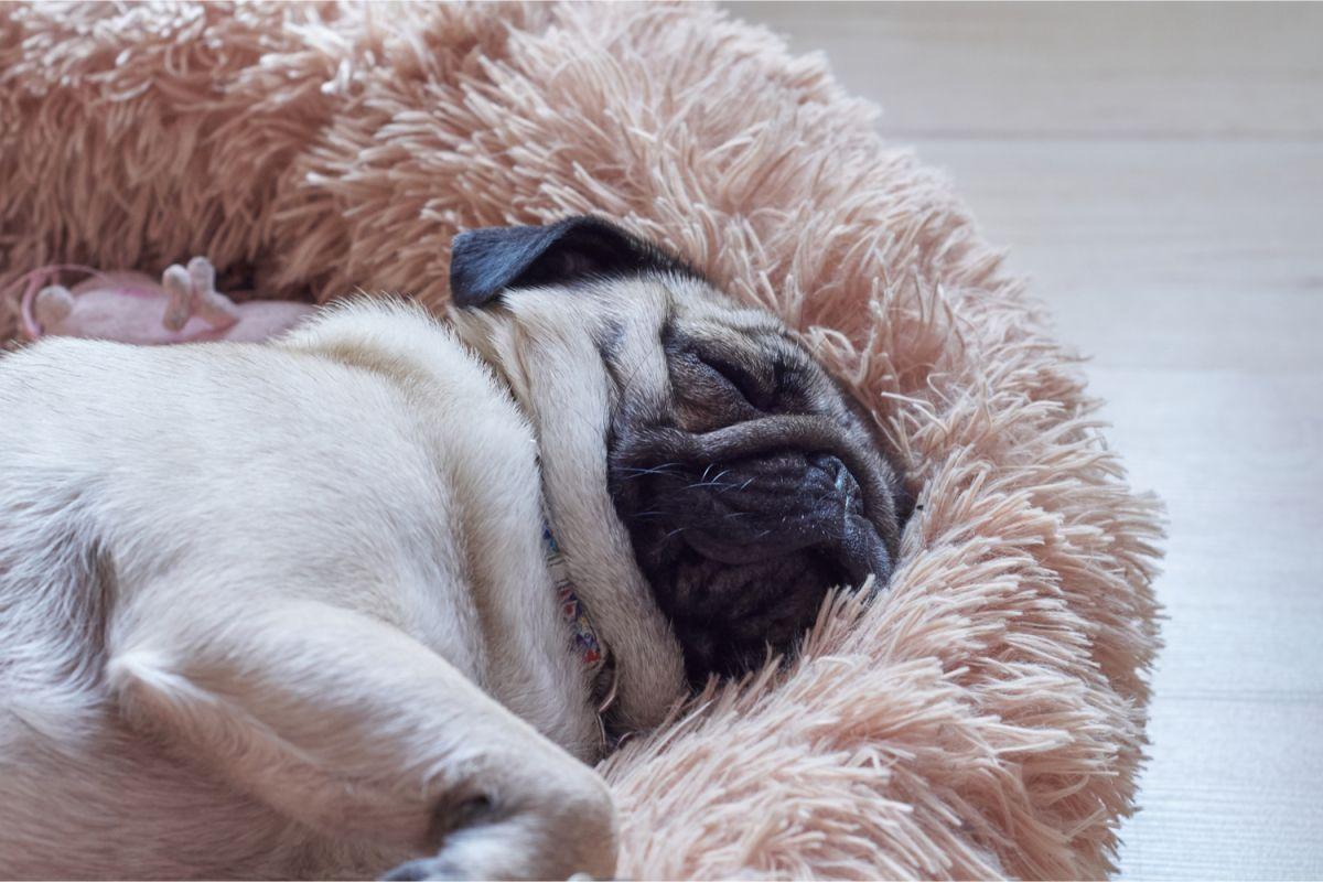 Estos artículos que facilitarán la tarea de entrenamiento y adaptación de la mascota a tu hogar