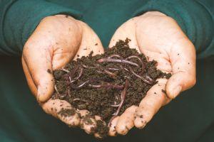 Soñar con gusanos, una señal de advertencia: descubre sus diversas interpretaciones