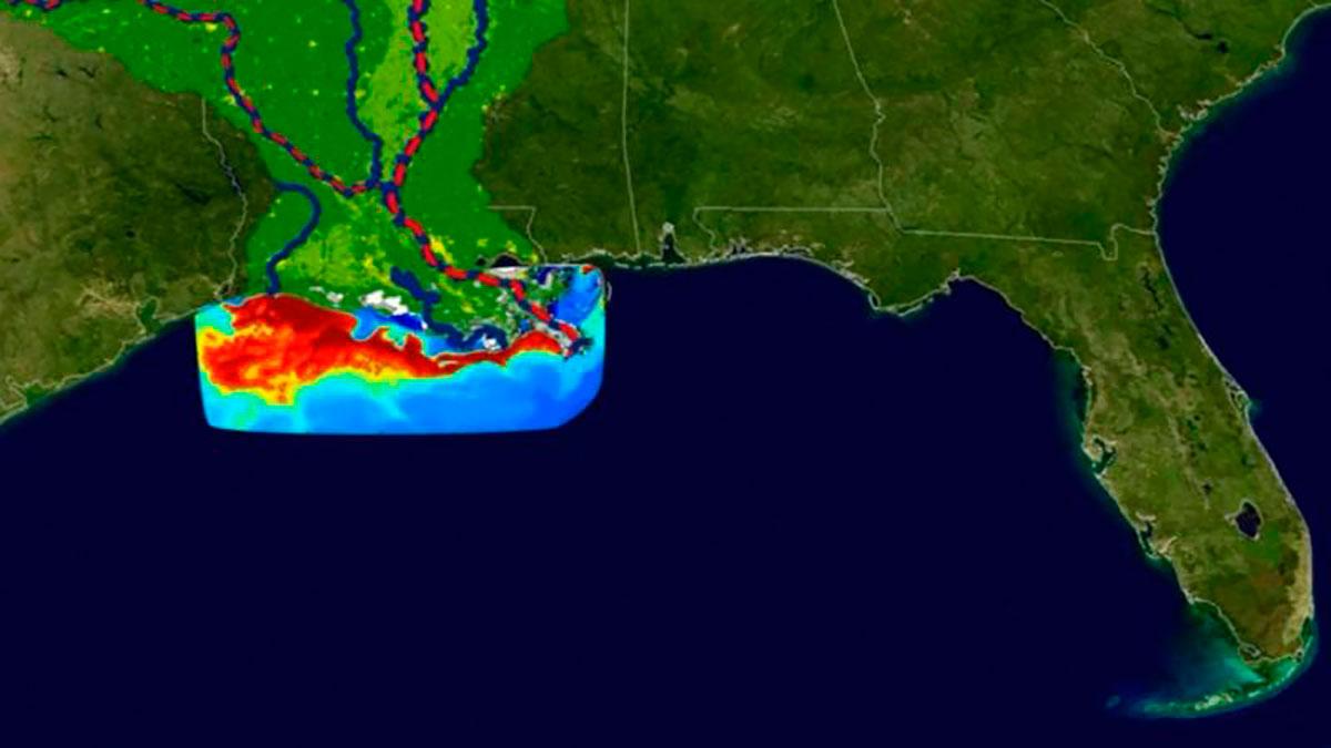 """""""Zona muerta"""" del Golfo de México: la preocupante expansión de esta área en la que la vida marina es imposible"""