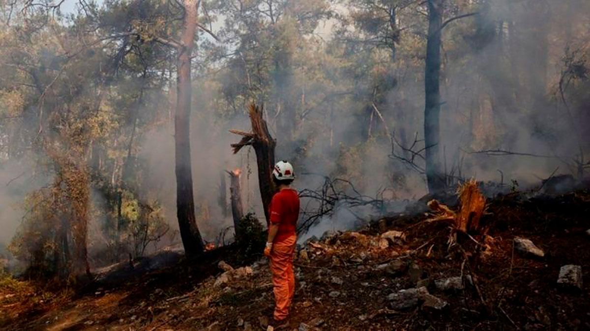 Los incendios forestales han quemado bosques enteros, dejando la tierra arrasada.