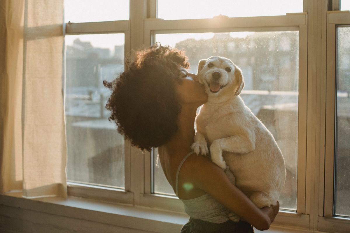 Los perros aportan energía positiva.