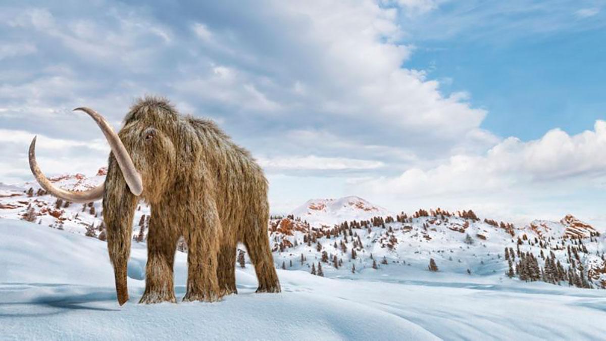 Los mamuts lanudos se extinguieron hace milenios, pero la ingeniería genética podría traerlos de vuelta a la Tierra.