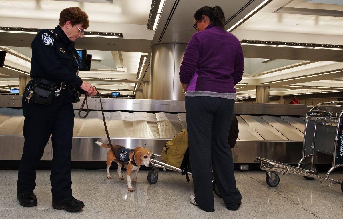 El personal de CBP cuenta con perros adiestrados capaces de olfatear alimentos y productos orgánicos.