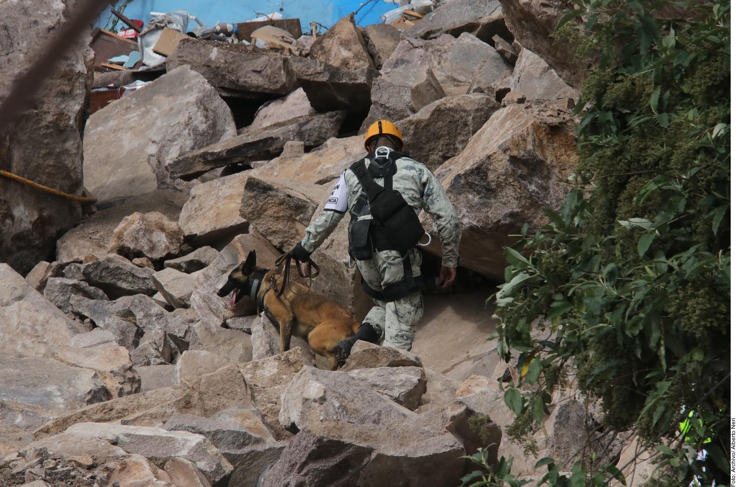 Binomios caninos ayudaron a localizar los cuerpos de Paola y Dylan. Foto: Agencia Reforma.