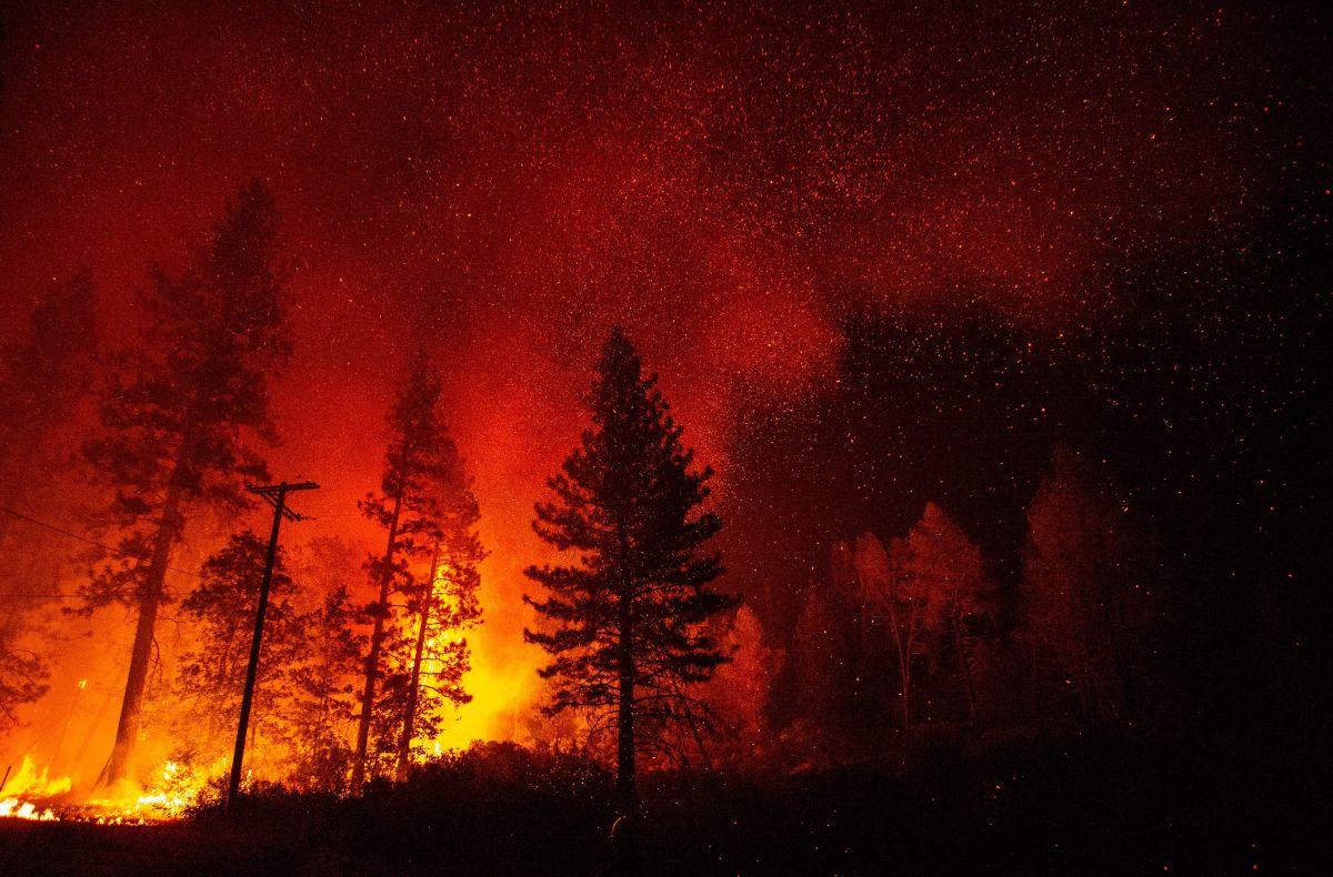 El equivalente a 9,000 acres acabaron bajo el fuego en el parque nacional Shasta Trinity.