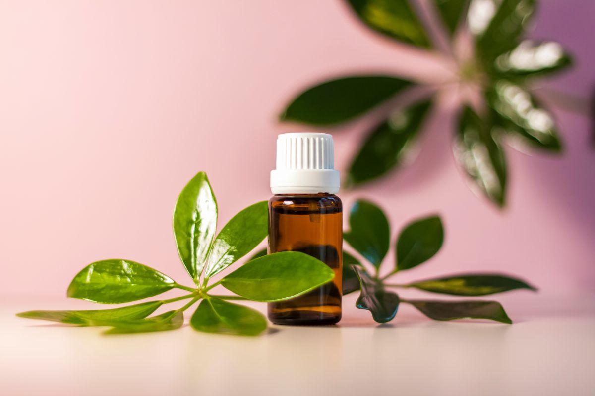 Un aceite antifúngico que cuida el cuerpo de pies a cabeza de diversos problemas.
