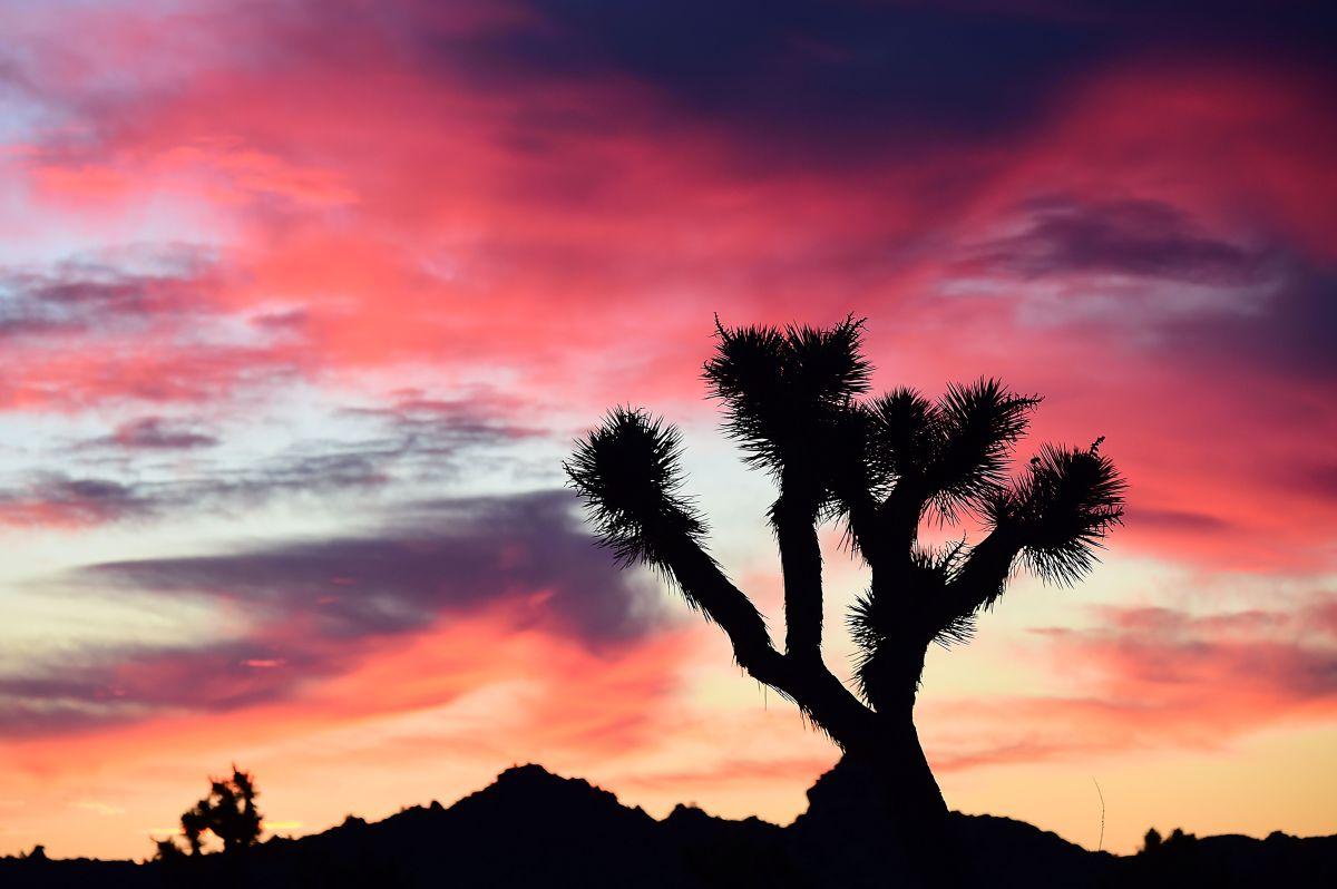 Los restos fueron encontrados en un terreno accidentado del desierto abierto de Yucca Valley.