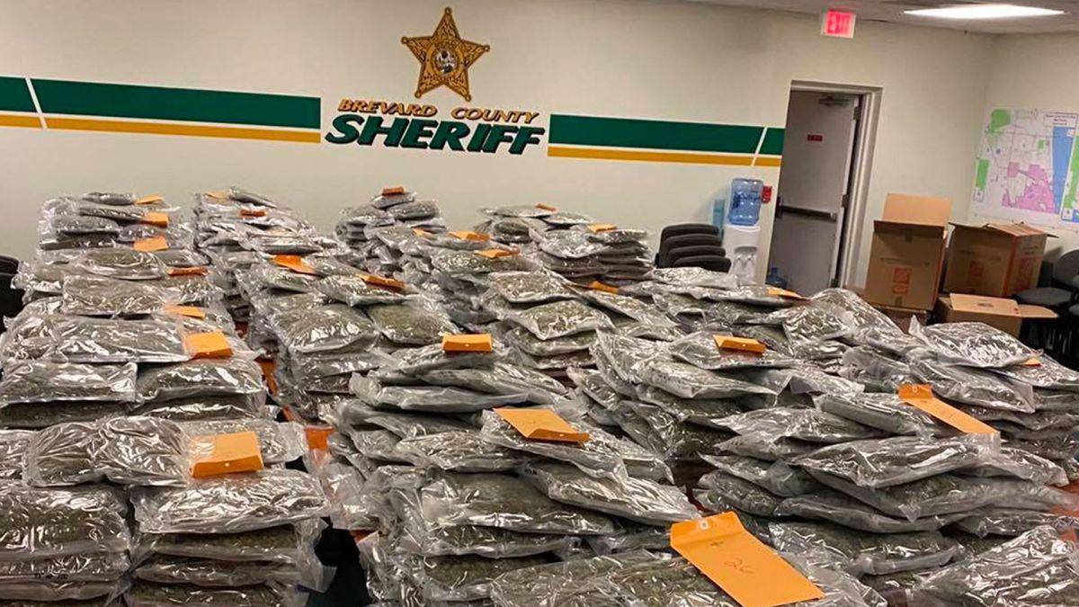 Imagen de la gran cantidad de droga incautada y almacenada en las instalaciones policiales del condado de Brevard, en Florida.